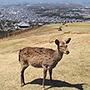 奈良では絶品よもぎ団子を買ってシカと絶景を見るべし~地元の人頼りの旅 in 奈良~
